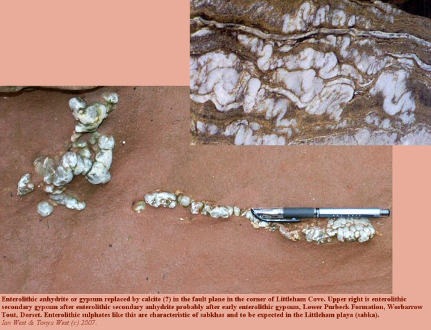 Replaced enterolithic anhydrite or gypsum in the fault plane in the corner of Littleham Cove, near Budleigh Salterton, Devon