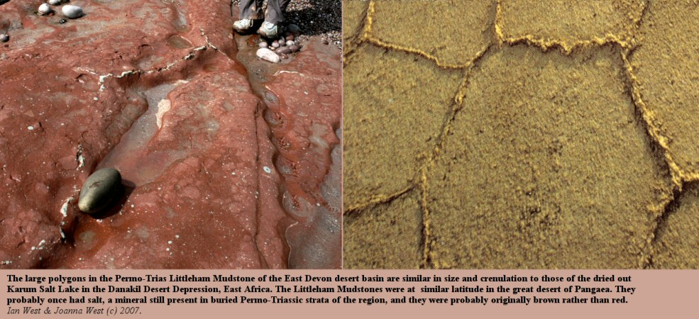 Similarity of polygonal desiccation cracks in the Littleham Mudstones, near Budleigh Salterton, Devon, and those in the dried Karum salt lake of the Danakil Depression, East Africa