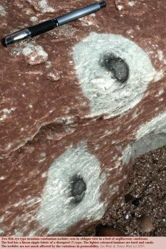 Two large fish-eye type, uranium vanadium nodules in rippled sandstone of the Littleham Mudstone, Littleham Cove, near Budleigh Salterton, Devon, UK