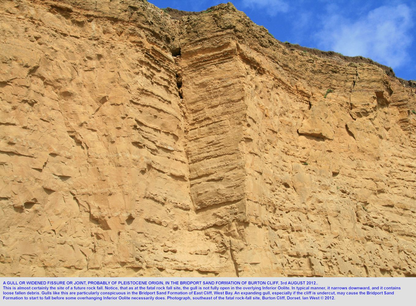 A gull at a projecting section of Bridport Sand Formation, Burton Cliff, a piece which may fall later
