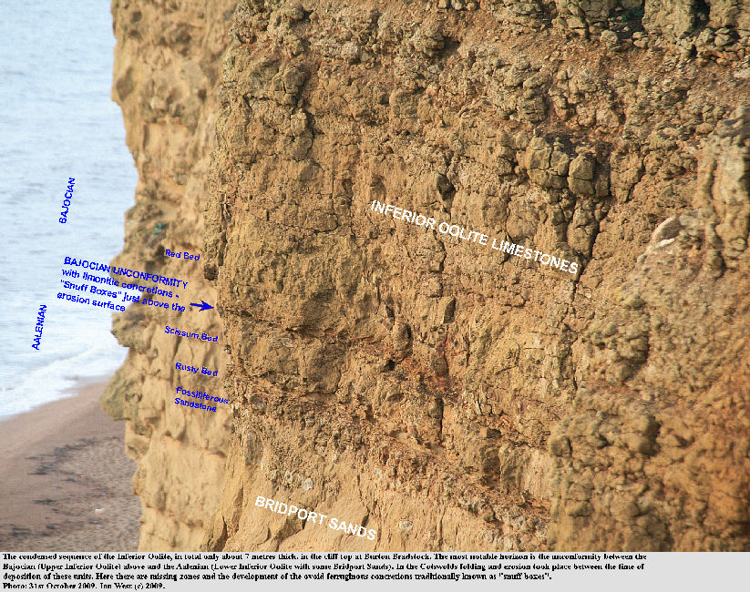 The locations of the Bajocian unconformity and the snuff boxes in the Inferior Oolite at the top of the cliff at Burton Bradstock, Dorset, 2009