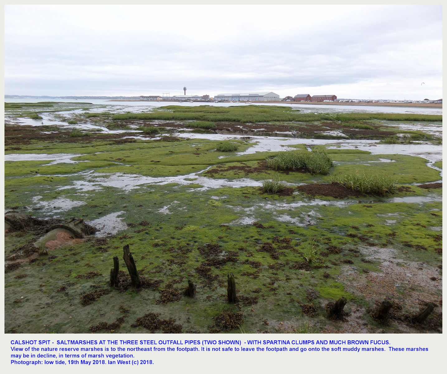 Saltmarshes with Spartina and Fucus at the Southampton Water side of Calshot Spit, as seen from the footpath near three old, outfall pipes, 12th August 2018