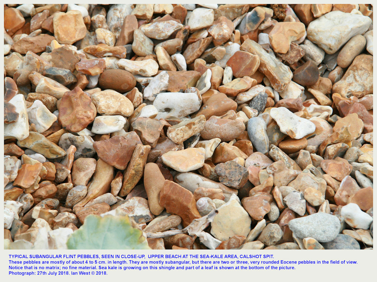 Details of subangular flint pebbles at the sea-kale site, near the  Calshot Spit, brick accomodation blocks
