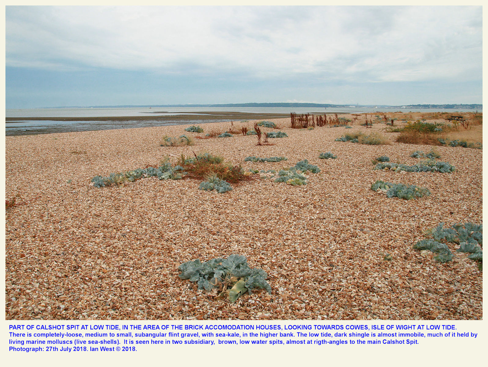 The main shingle beach, with sea-kale, and a view of low-tide, subsidiary spits, near the middle of Calshot Spit, 27th June 2018
