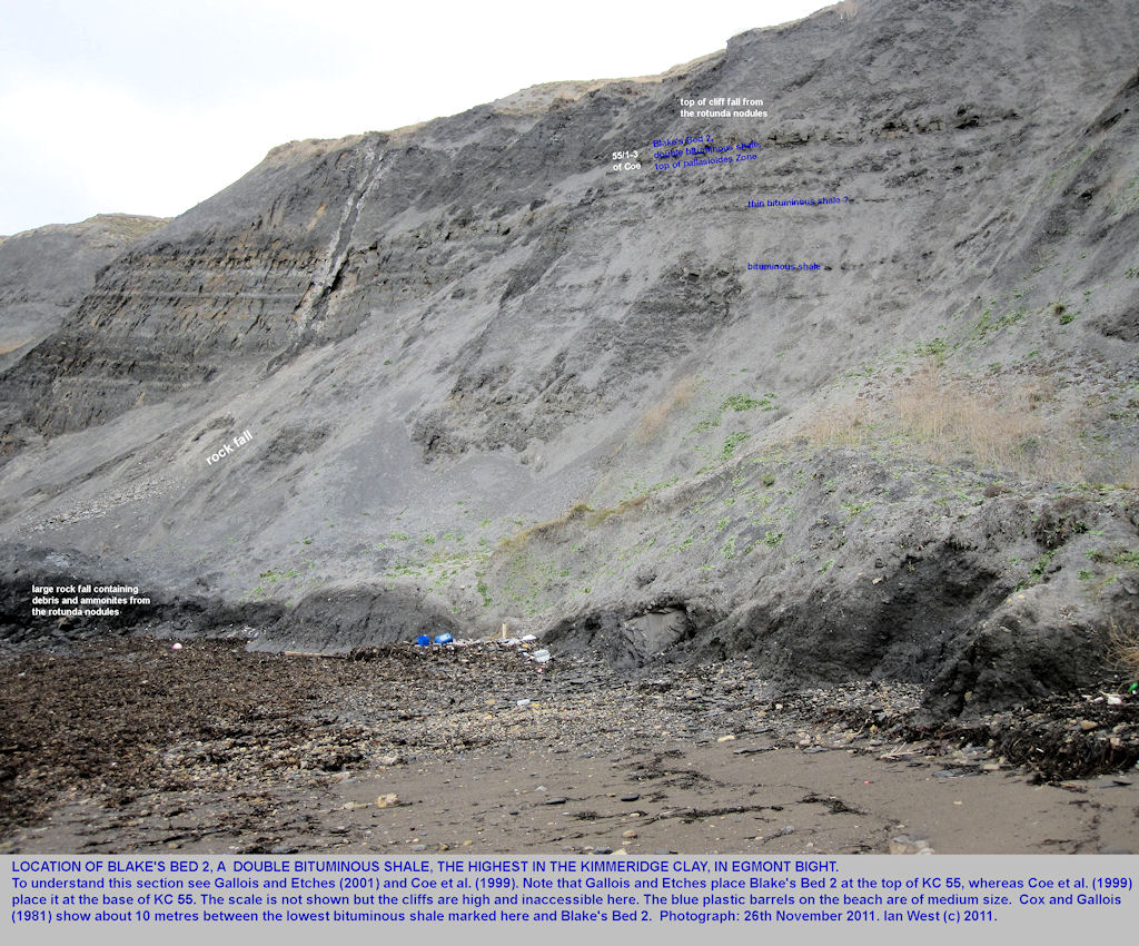 Details of the eastern part of Egmont Bight, near Chapman's Pool, Dorset, showing Blake's Bed 2 and a rockfall from the Rotunda Nodules, November 2011