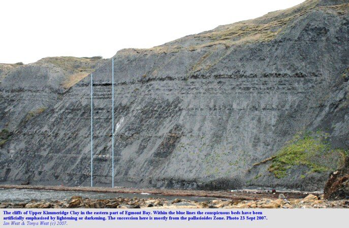 The cliffs in the eastern part of Egmont Bight, Chapman's Pool, Dorset, showing mostly pallasioides Zone of the Kimmeridge Clay, Sept 2007