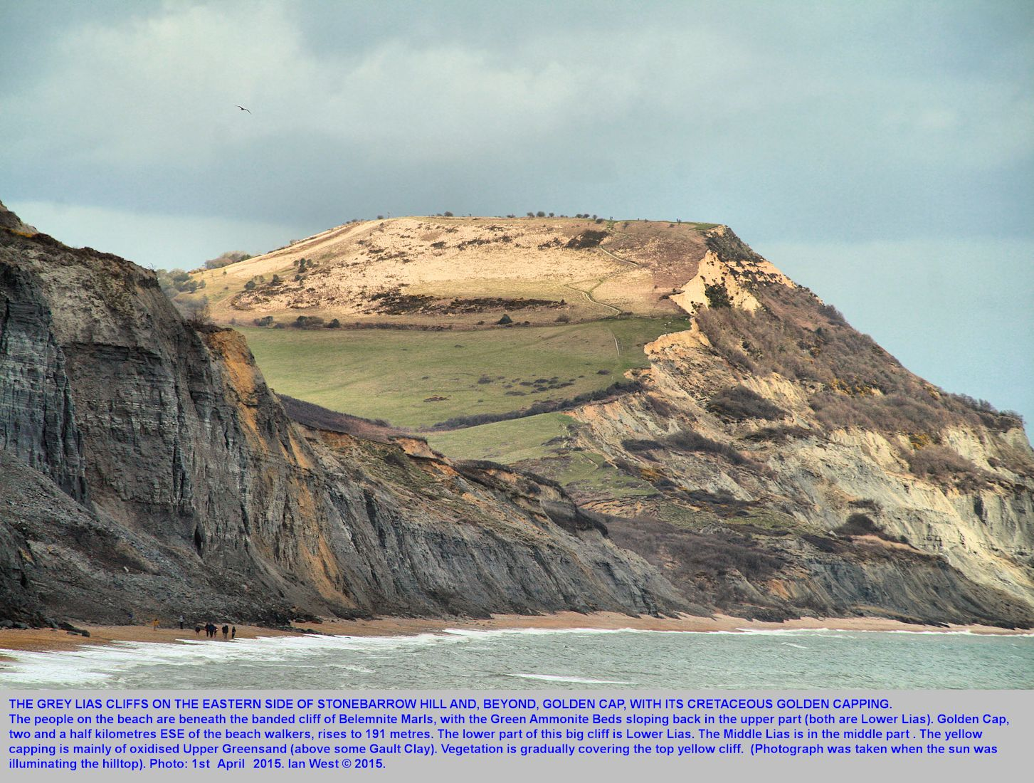 The cliffs of Belemnite Marls, Lias, on the east side of Stonebarrow Hill, and Golden Cap beyond, illuminated by the sun, east of Charmouth, Dorset, 1st April 2015
