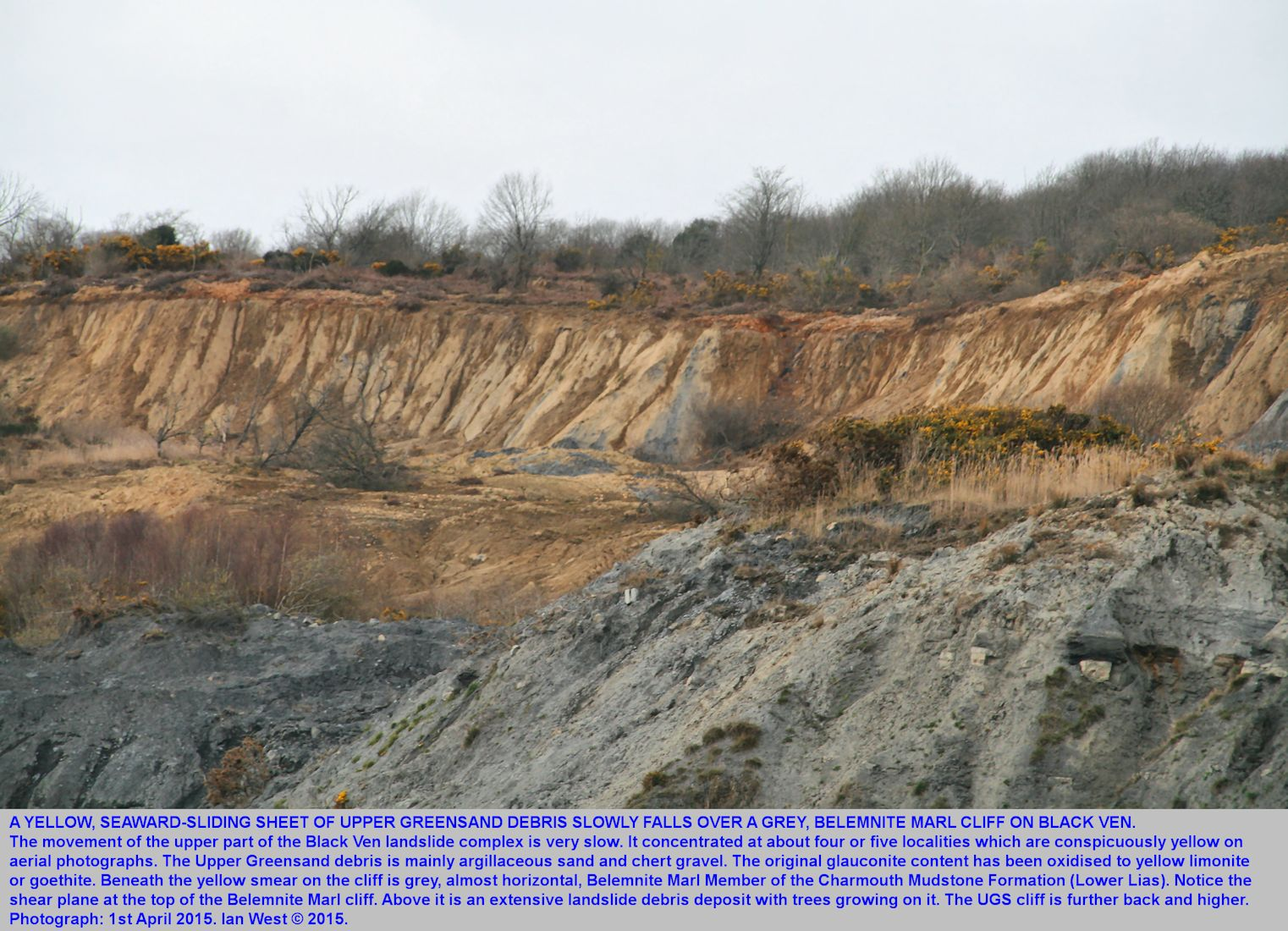 Details of a yellow debris fall of weathered Upper Greensand material over a cliff of Belemnite Marl Member, the Black Ven landslide complex, between Lyme Regis and Charmouth, Dorset, as seen on 1st April 2015