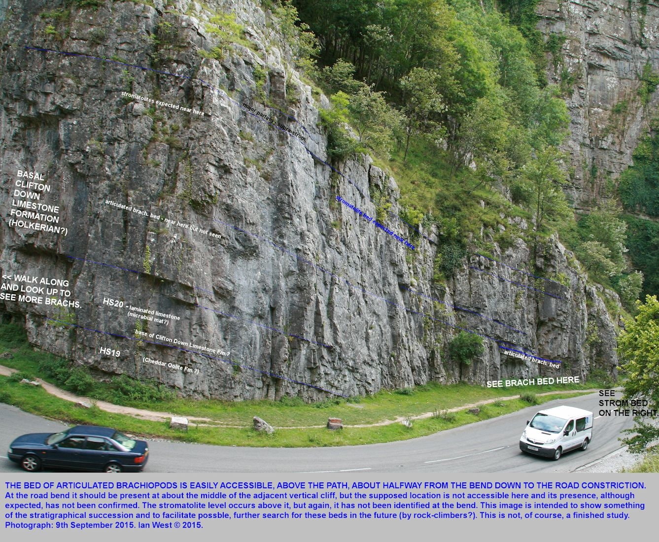 A view of the inner, down-gorge cliff of Horseshoe Bend, Cheddar Gorge, Mendip Hills, Somerset, to show the proven and suspected locations of the articulated brachiopod bed