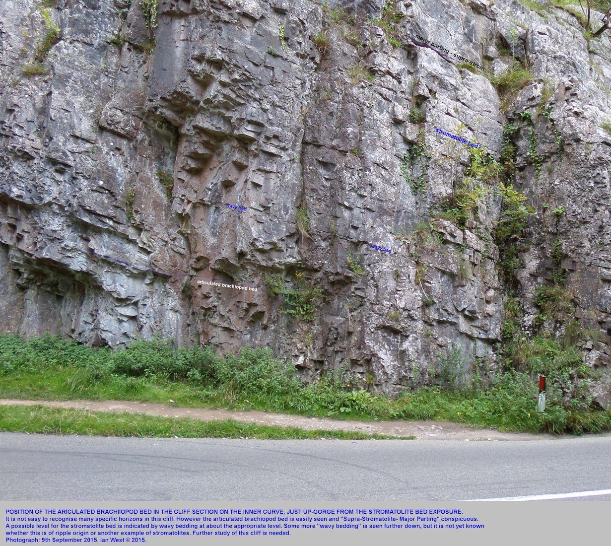 A medium-distance view of the location of the articulated brachiopod bed, Lower Clifton Down Limestone Formation, constriction end of Horseshoe Bend, Cheddar Gorge, Mendip Hills, Somerset, 2015