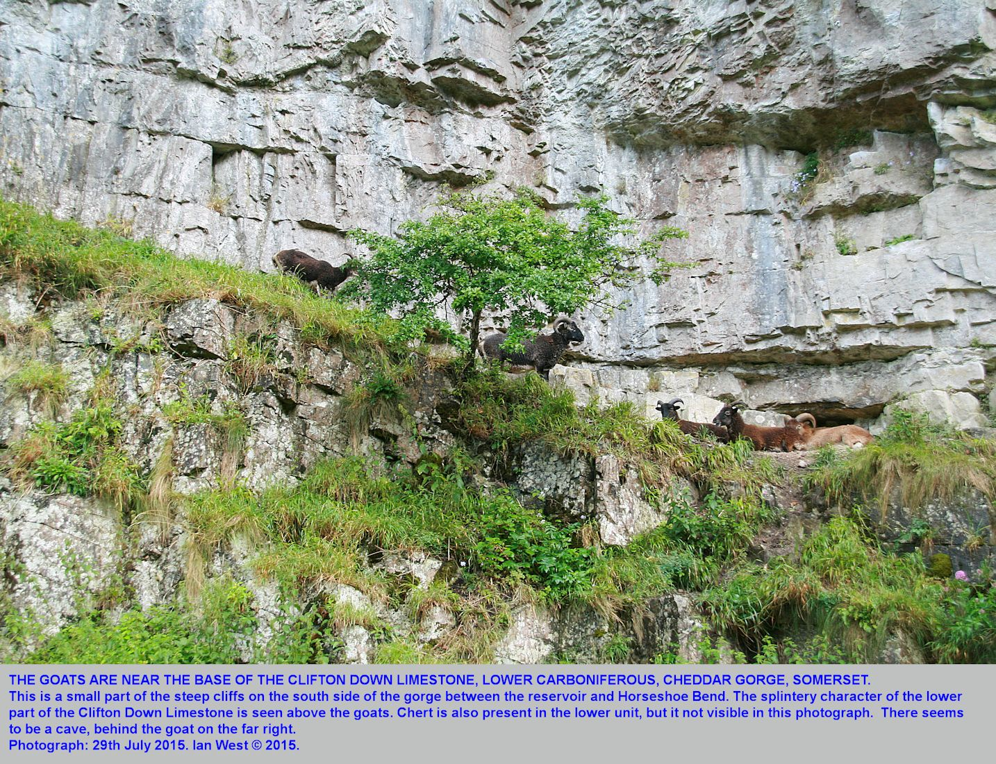 Clifton Down Limestone, the lower splintery part, above the Horseshoe Bend, Cheddar Gorge, Mendip Hills, Somerset, 29th July 2015