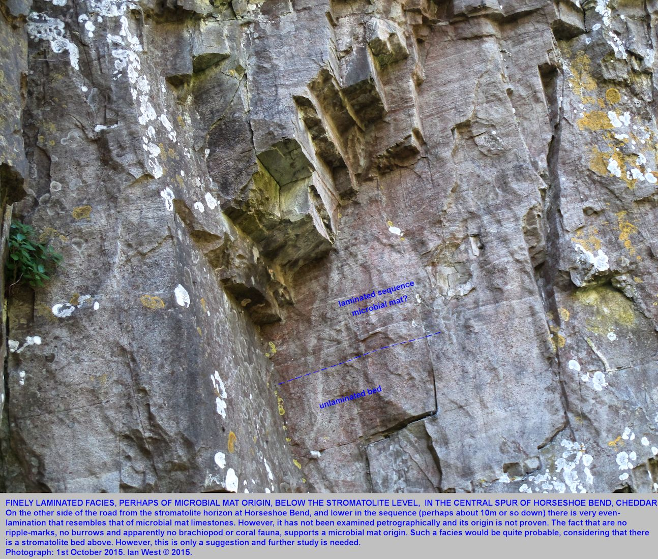 Finely laminated limestone, that may be of microbial mat origin in the central spur of Horseshoe Bend, Cheddar Gorge, Mendip Hills, Somerset, rather lower than the hemispheroidal stromatolites
