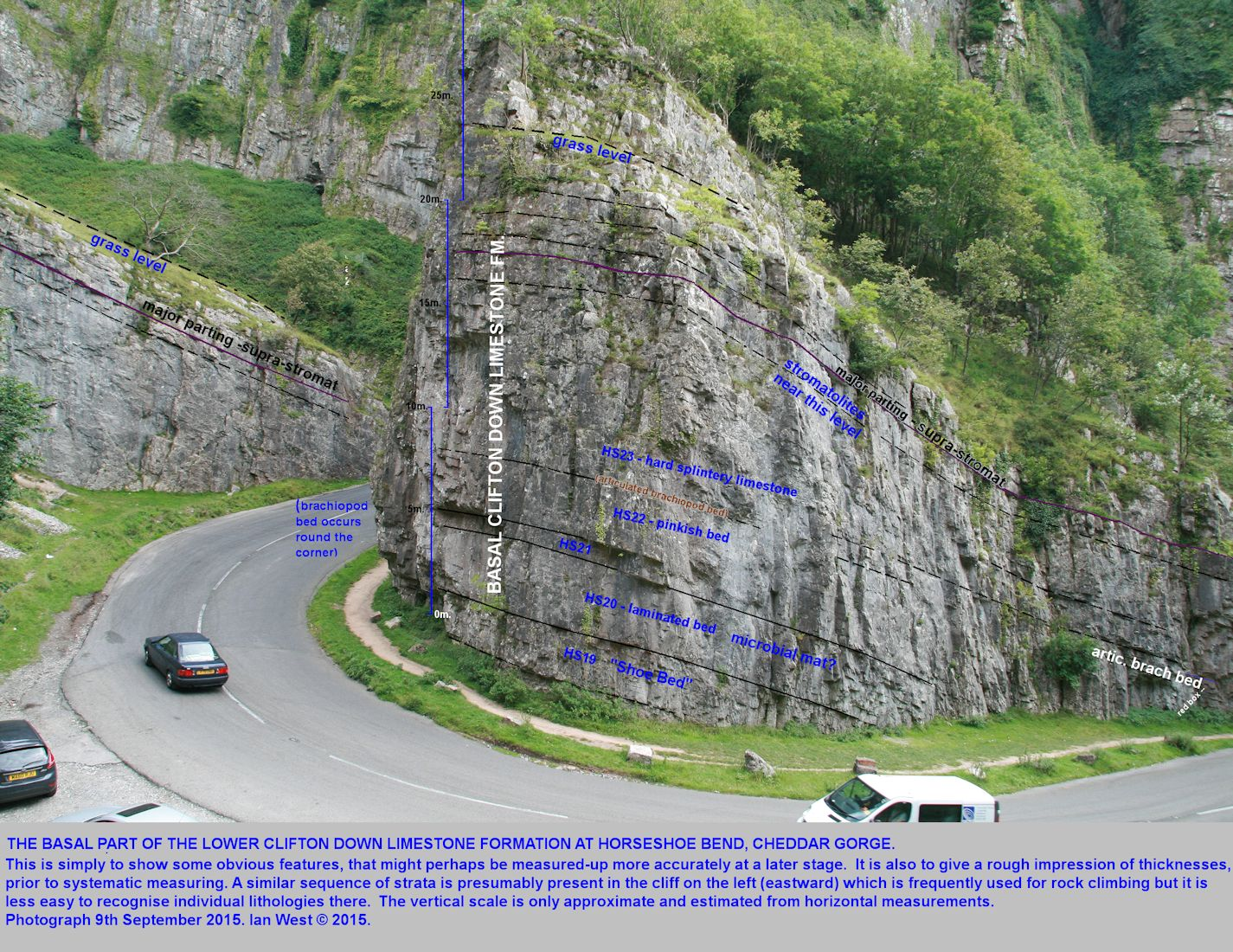 The basal Clifton Down Limestone Formation sequence, with approximate vertical scale, at Horseshoe Bend, Cheddar Gorge, Mendip Hills, Somerset