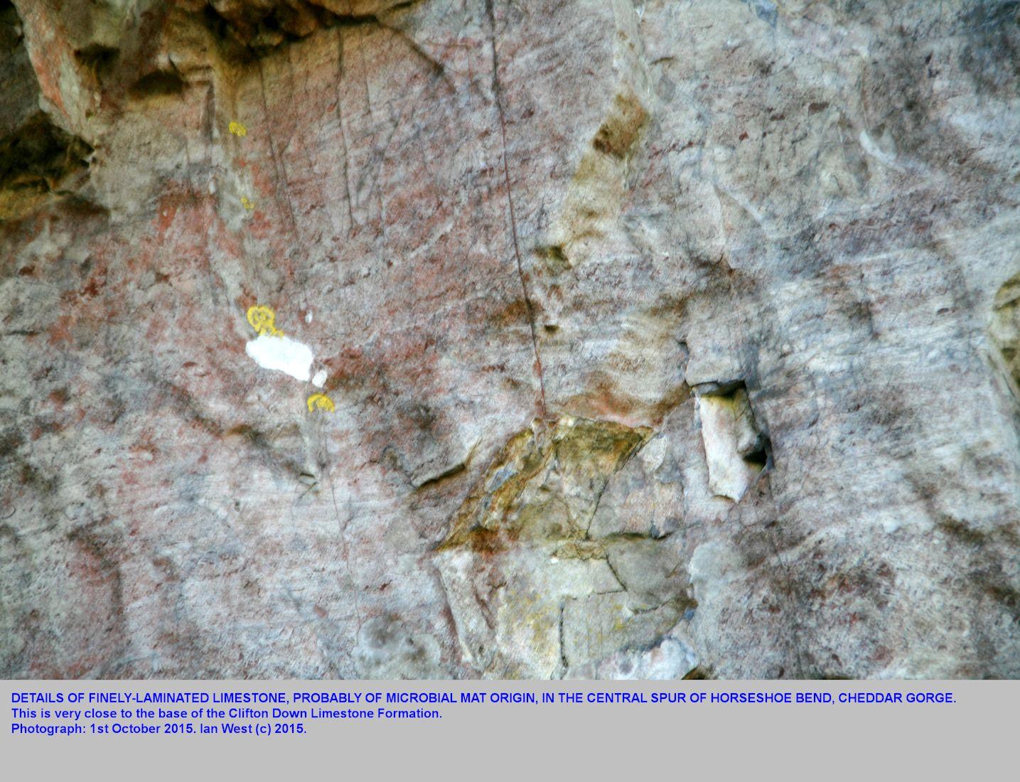 Cheddar Gorge, Geology  (by Ian West)