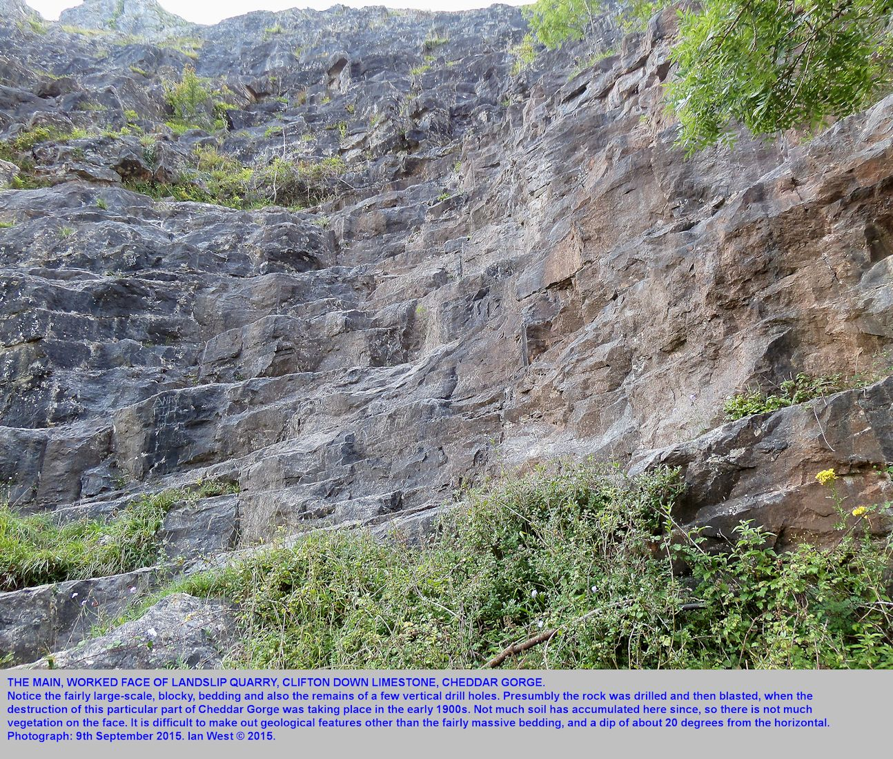 A former working face of Landslip Quarry, Cheddar Gorge, Mendip Hills, Somerset, showing massive bedding and some old drill holes