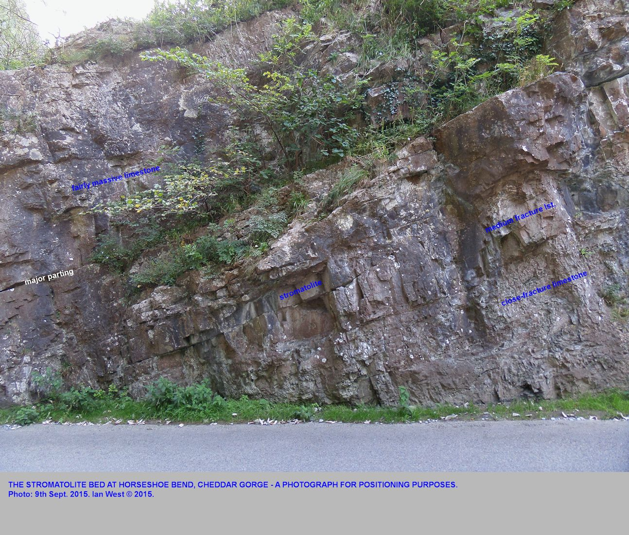 A general photograph, for positioning purposes, showing the stromatolite bed of the Lower Clifton Down Limestone at Horseshoe Bend, Cheddar Gorge, Mendip Hills, Somerset, 9th September 2015