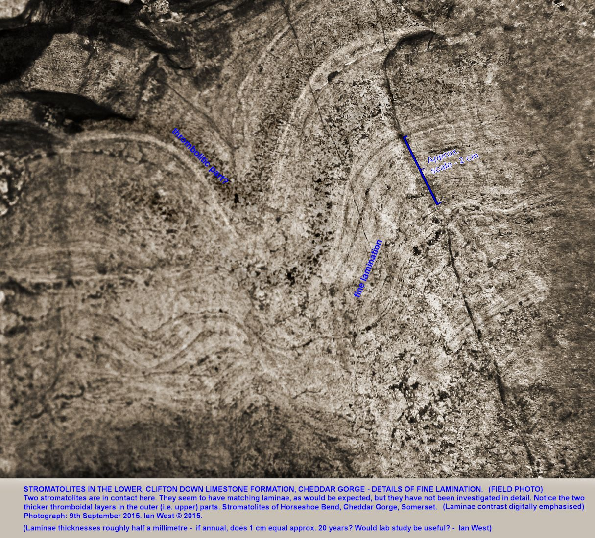 Details of stromatolite mounds at the Horseshoe Bend, Cheddar Gorge, Mendip Hills, Somerset, an enhanced field photograph