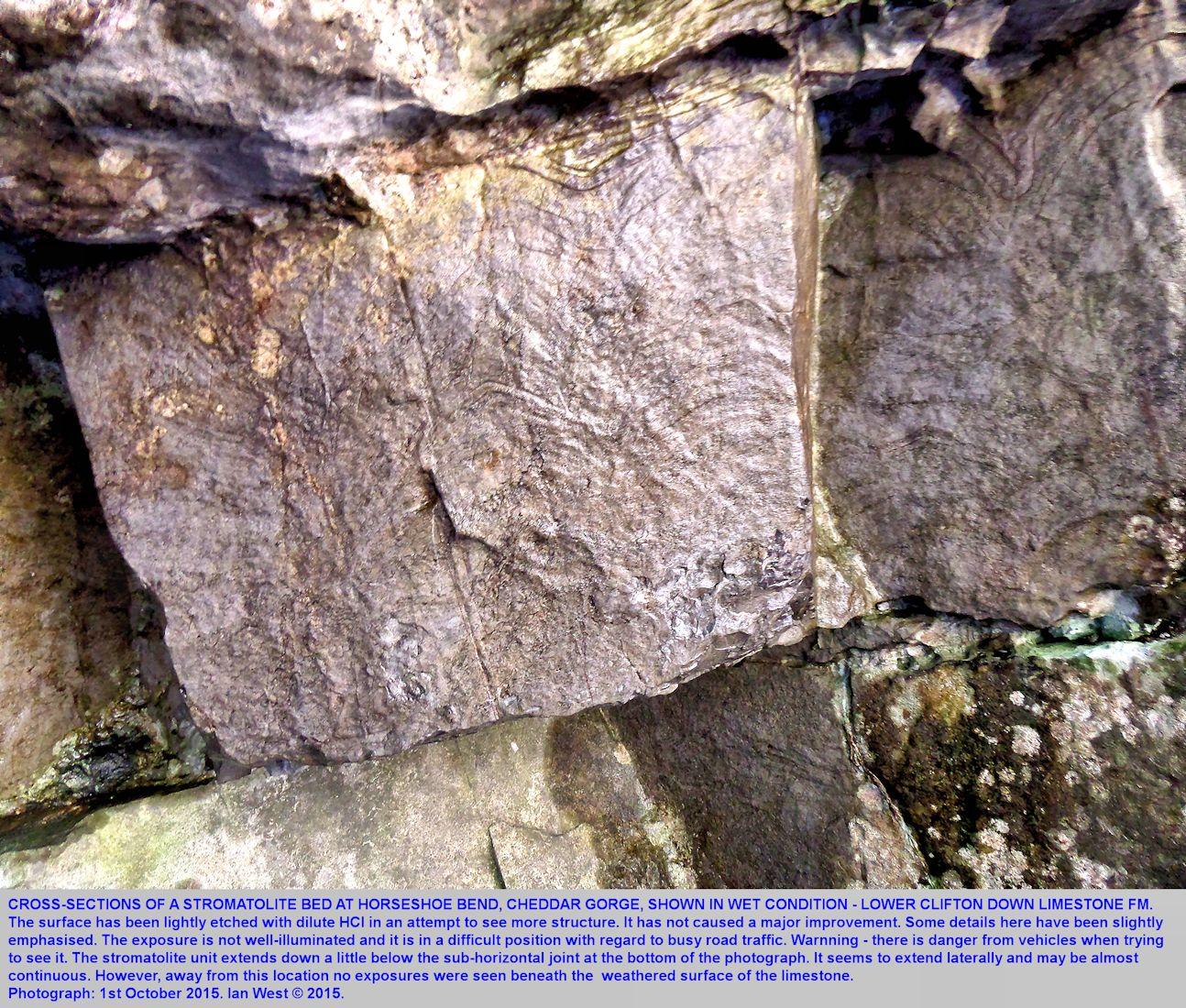 Details of stromatolites in the Lower Clifton Down Limestone Formation at Cheddar Gorge, wet surface after acid etching