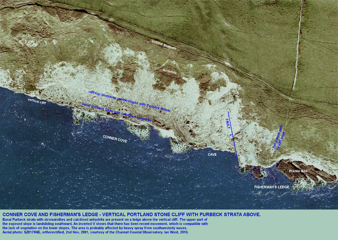 Conner Cove and Fisherman's Ledge, near Swanage, Isle of Purbeck, Dorset, aerial photograph