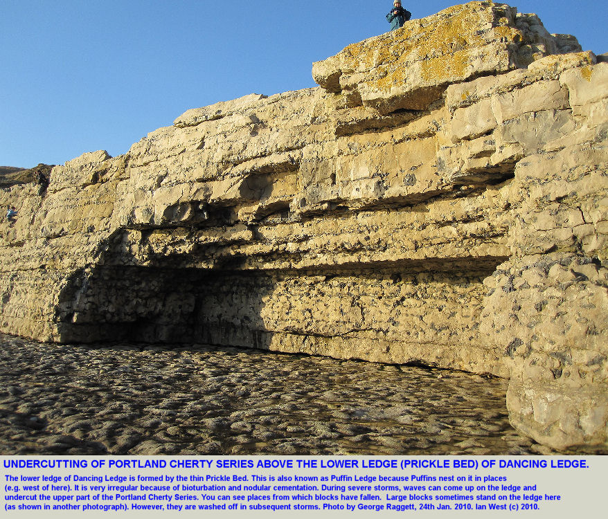Undercutting by the sea has taken place on the lower ledge of Dancing Ledge, near Swanage, Isle of Purbeck, Dorset, photo 2010