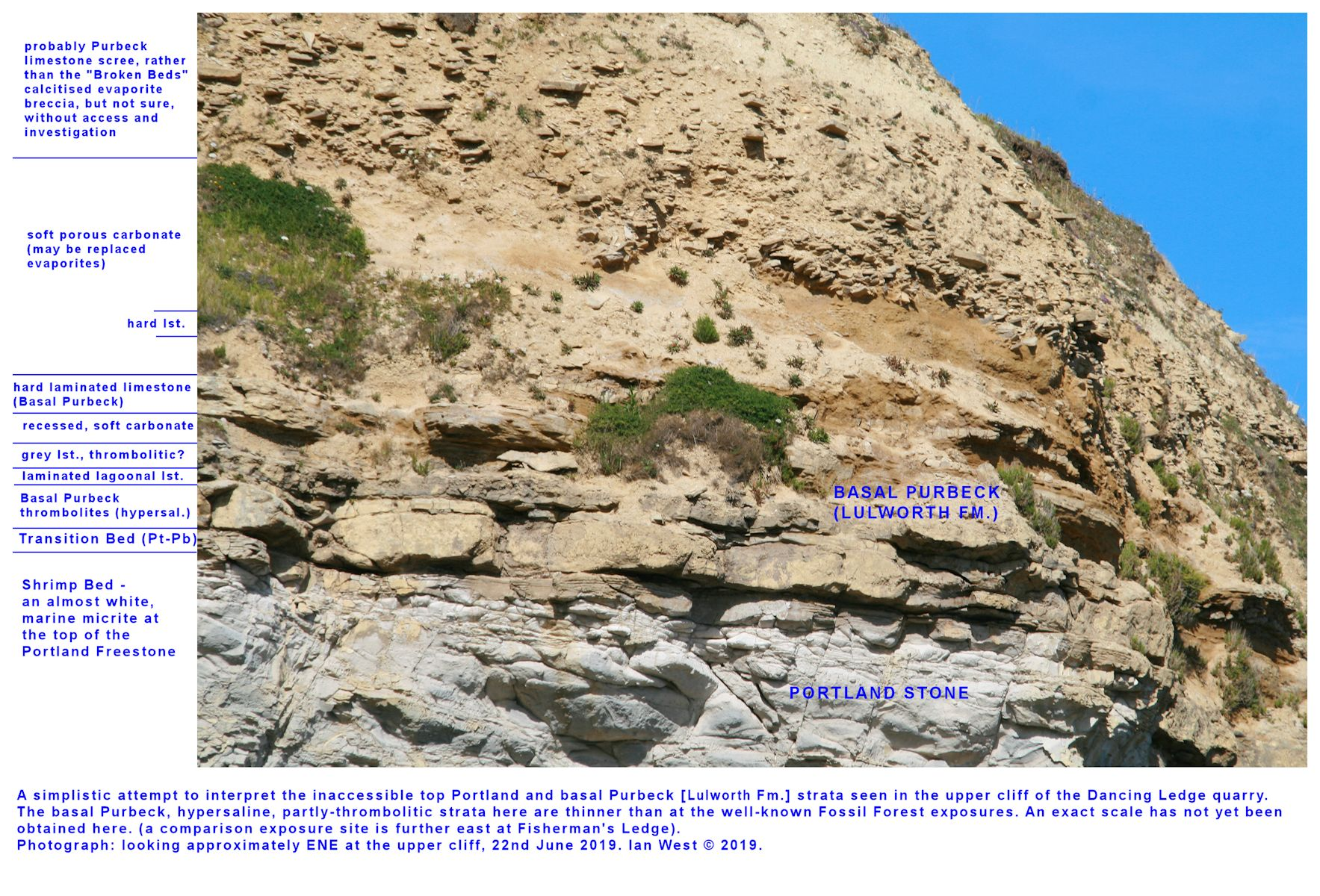 Some details of the Purbeck-Portland transition at Dancing Ledge, in an inaccessible location high in the cliff and thus with no thickness information, 22nd June 2019