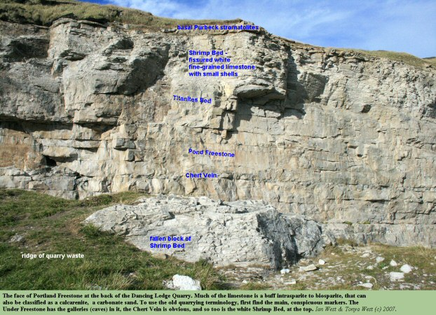 Part of the Portland Freestone succession in the back cliff of the upper ledge or abandoned quarry of Dancing Ledge, near Swanage, Isle of Purbeck, Dorset