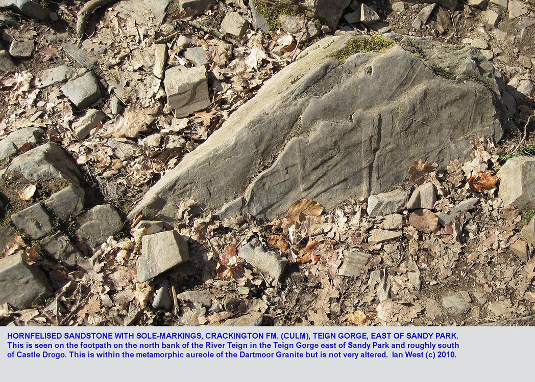 Hornfelised sandstone of the Crackington Formation, Culm, Teign Gorge, Dartmoor, Devon