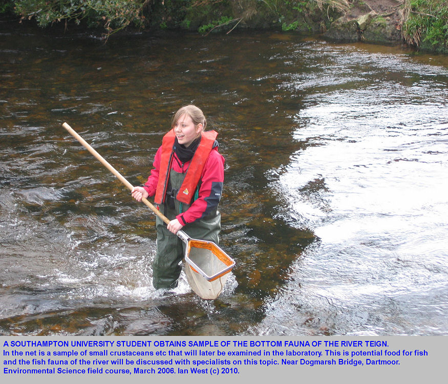 A student obtains a net sample of crustaceans etc from the base of the fast flowing River Teign, near Dogmarsh Bridge, Dartmoor, Devon, 2006