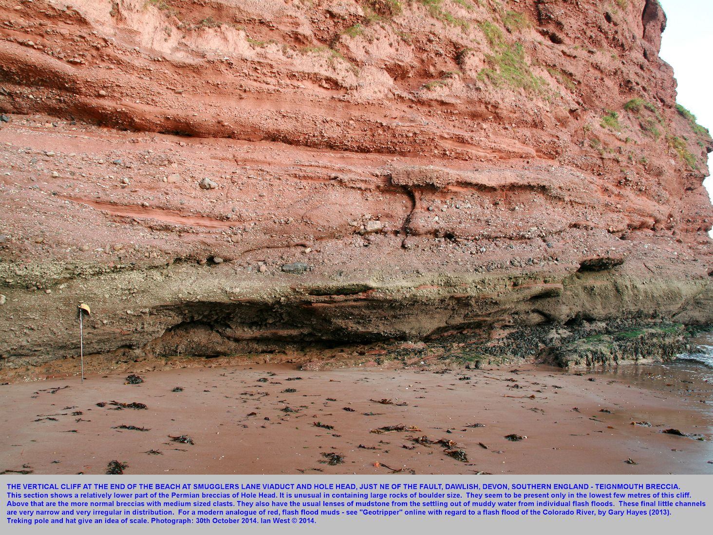 Southwestern Hole Head near Smugglers Lane, Dawlish, Devon - coarse, Permian, Teignmouth Breccia near the base of the cliff, and medium-sized breccia above, with mud-filled channels, 30th October 2014