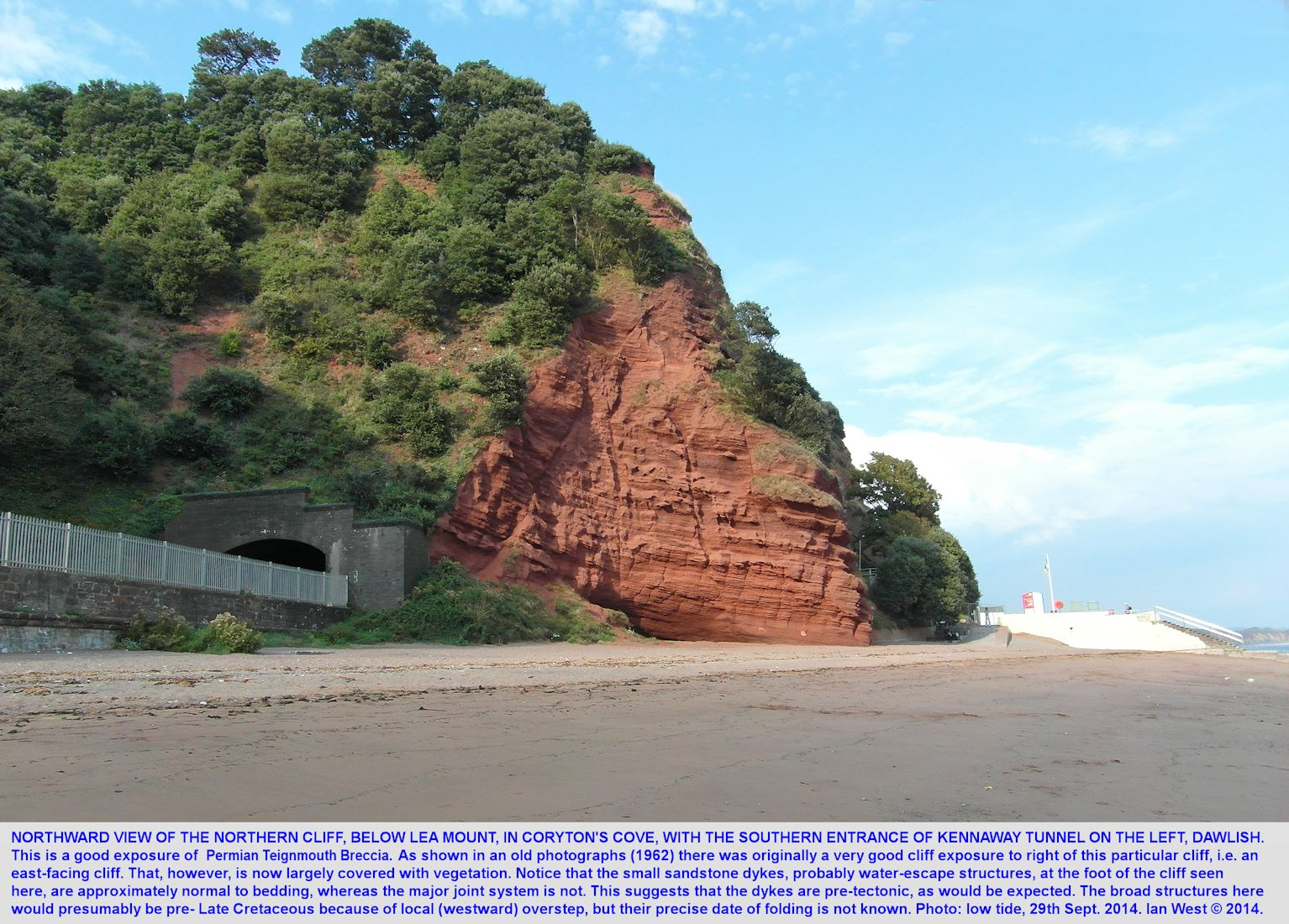 A general view northward in Coryton's Cove, Dawlish showing dipping Permian, Teignmouth Breccia, Dawlish,  Devon, 29th September 2014