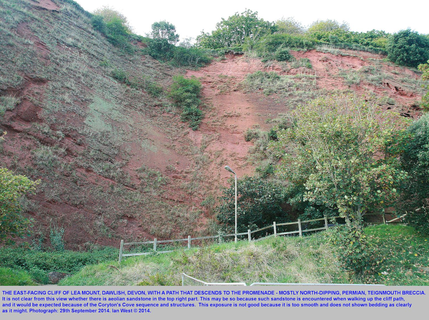 A smooth east-facing cliff of mainly Teignmouth Breccia (Permian) at Lea Mount, Dawlish,  Devon