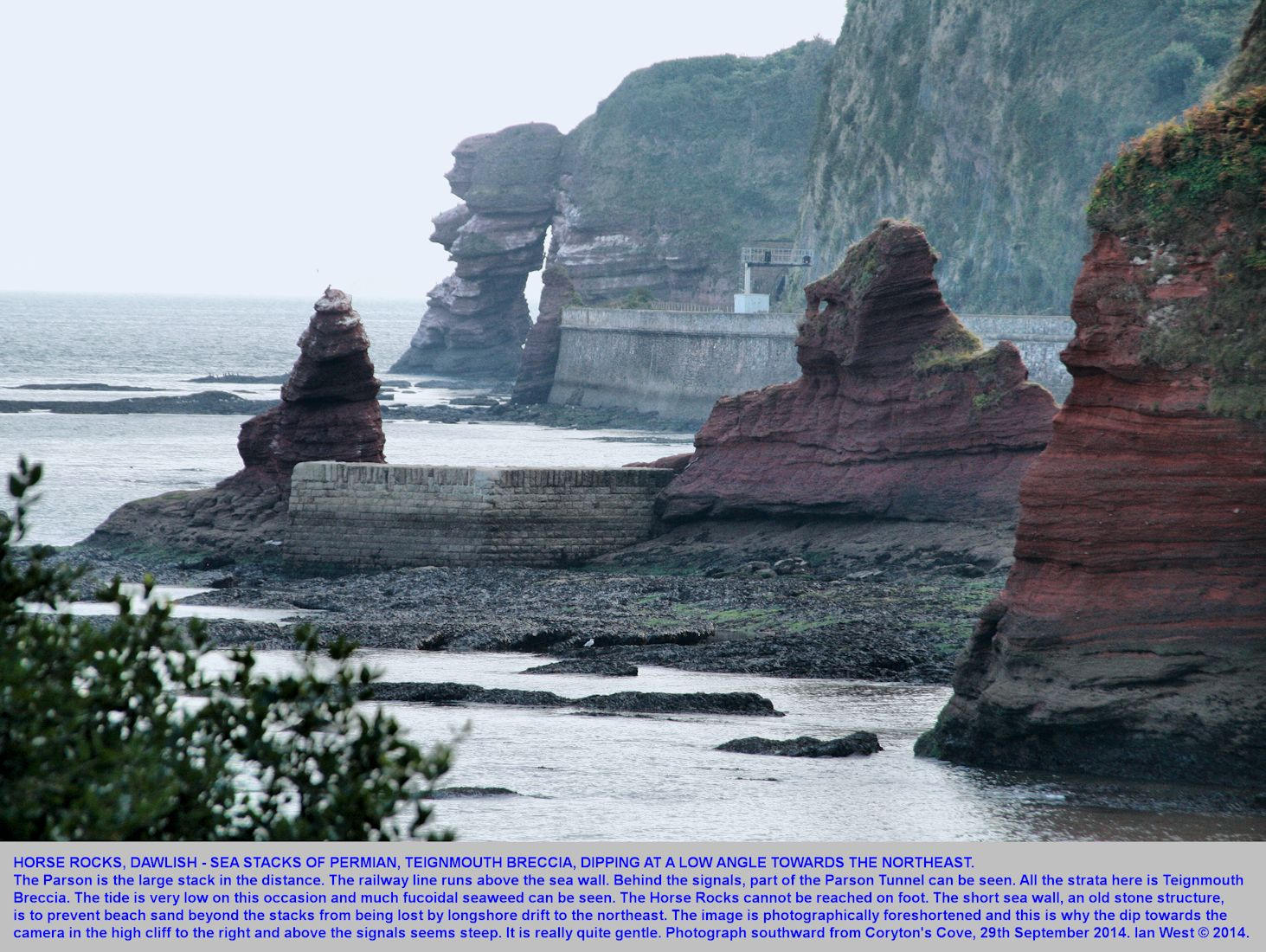 Horse Rocks, sea stacks of Permian, Teignmouth Breccia, dipping at a low angles, Dawlish, Devon, 29th September 2014
