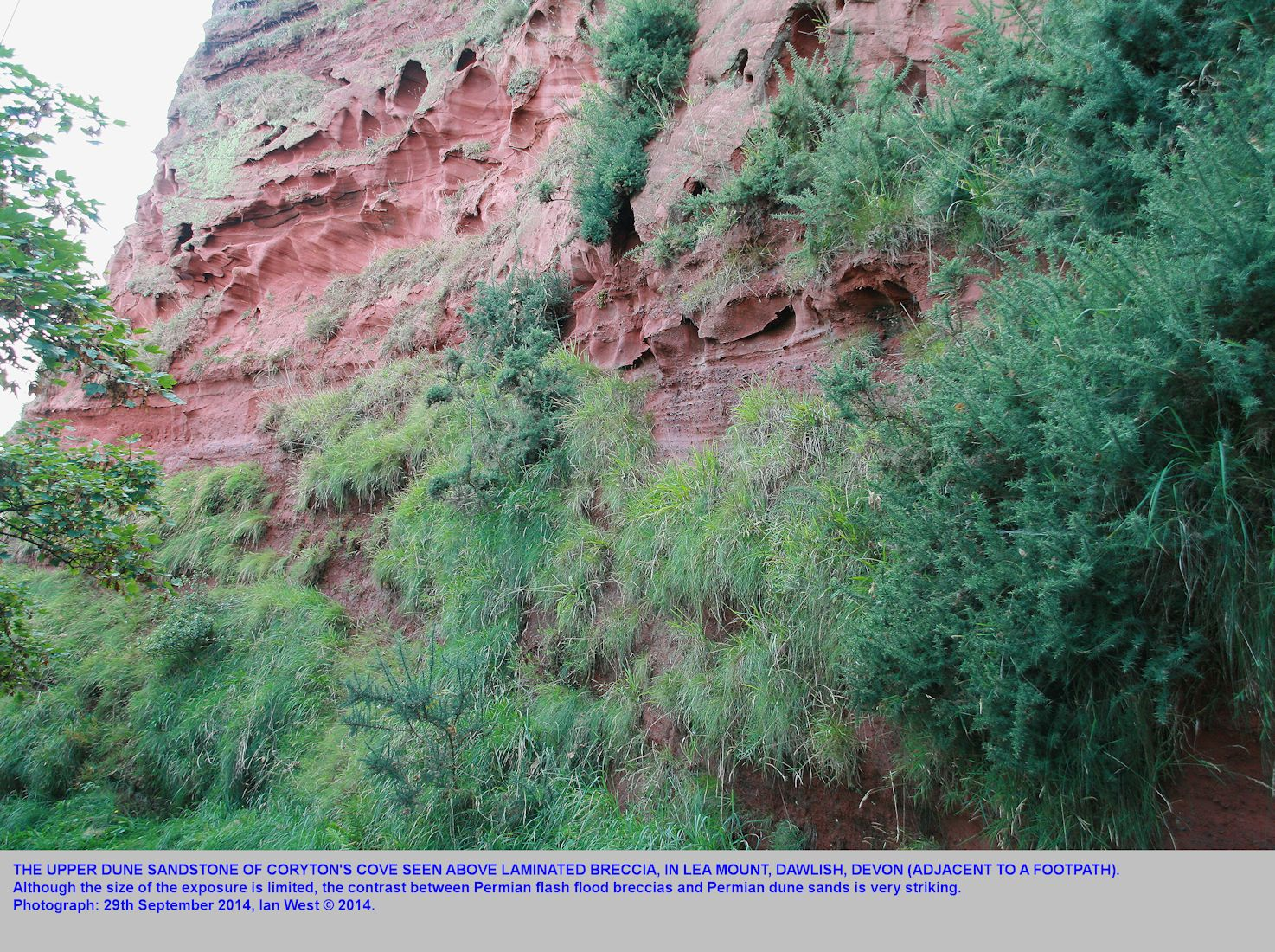 Aeolian dune sandstone over flash flood breccias, Permian strata, above footpath on Lea Mount, Dawlish,  Devon, 29th September 2014