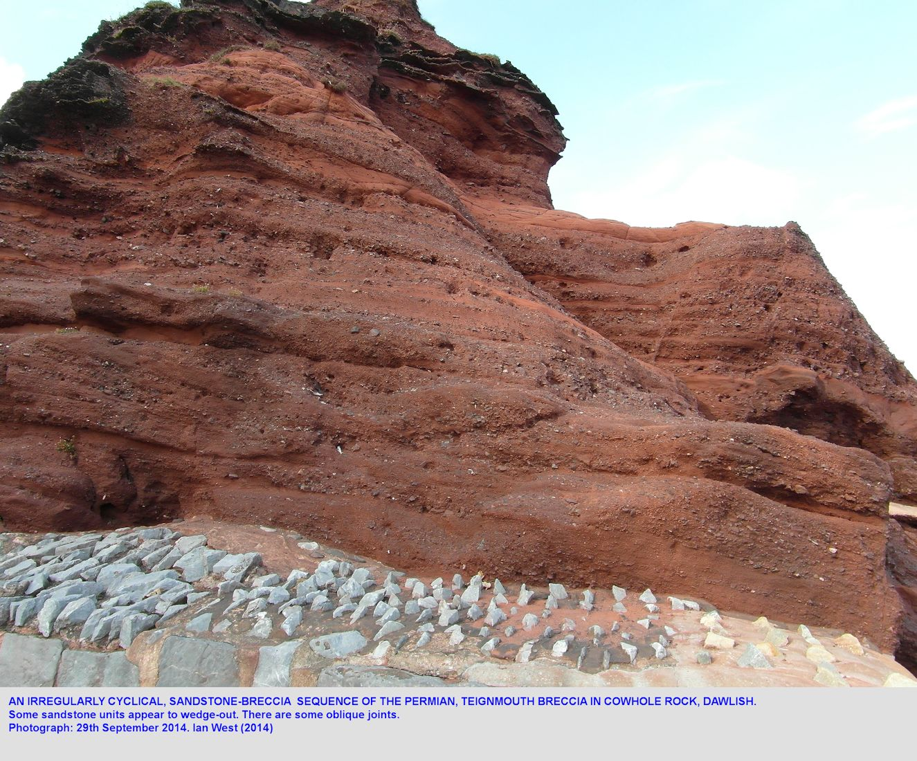 Alternating thin beds of sandstone and breccia in the Permian Teign Breccia of Cowhole Rock, Dawlish, Devon, 29th September 2014