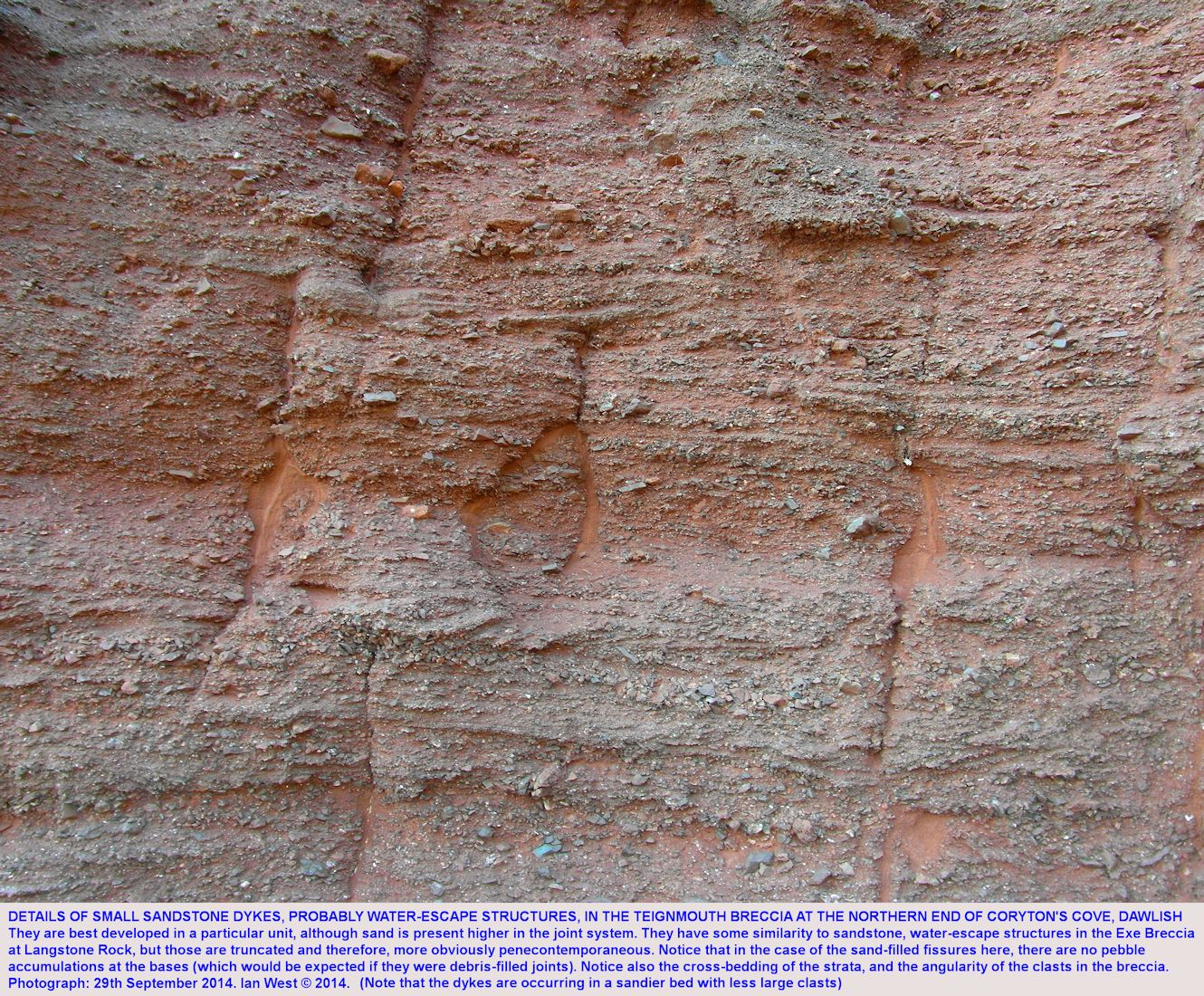 Details of sand fissures, probably water-escape structures, in the Teignmouth Breccia, Permian, north side of Coryton's Cove, Dawlish, Devon, 2014