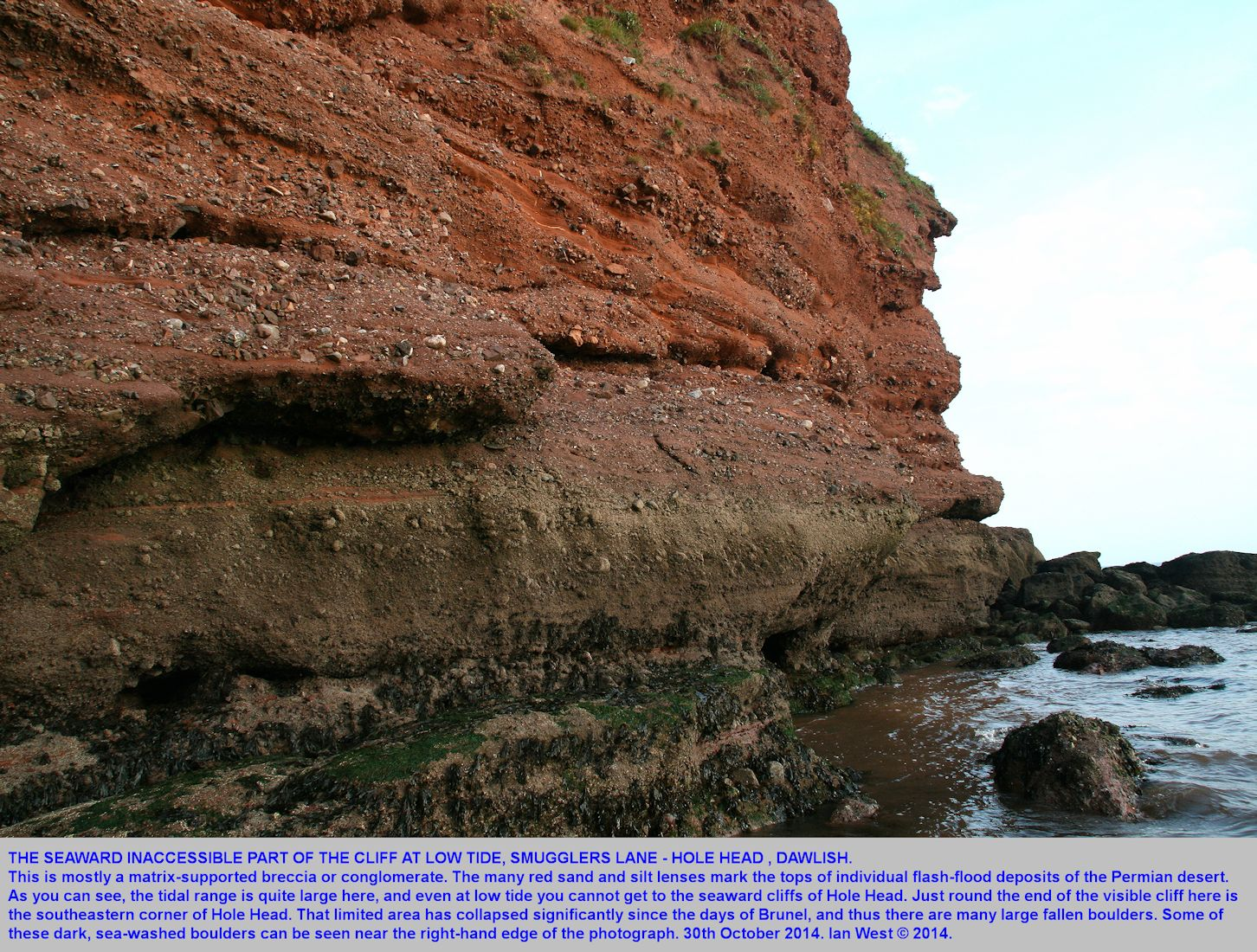 The seaward part of the vertical cliff of Permian Teignmouth Breccia at Smugglers Lane, Hole Head, Dawlish, Devon, 30th October 2014