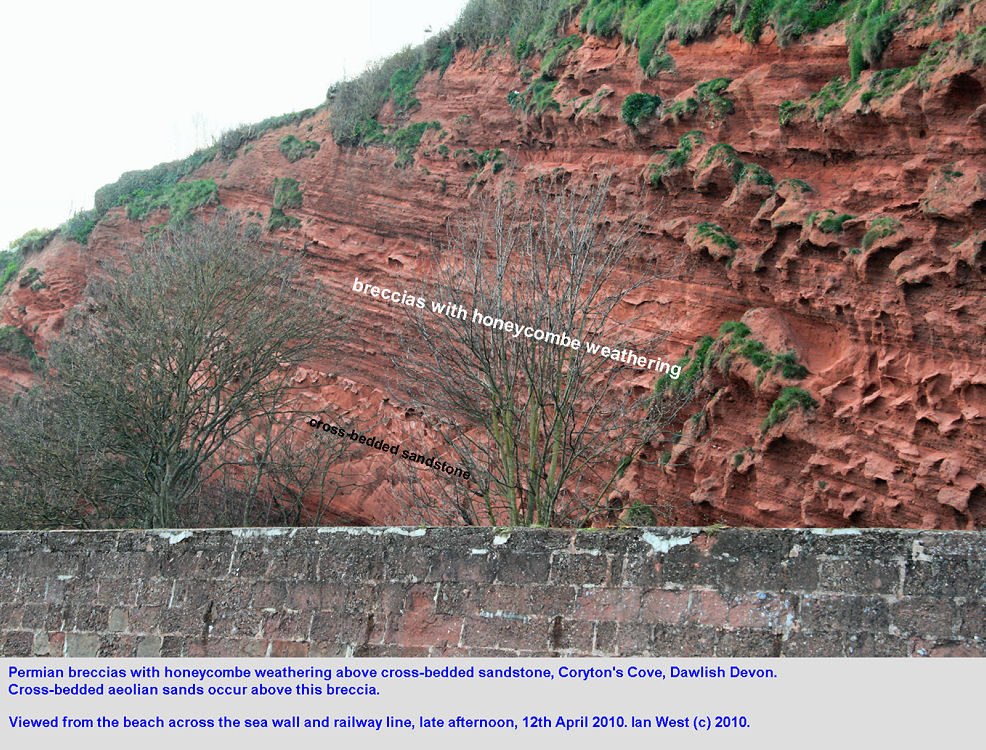 Sandstone and breccia at Coryton's Cove, Dawlish, Devon, 12th April 2010