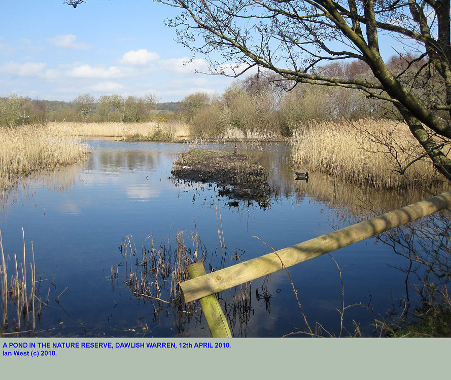 Pond, with birdlife, in the Dawlish Warren Nature Reserve, Devon, 2010