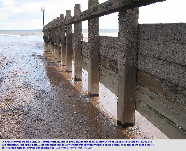 A timber groyne at Dawlish Warren, Devon, in March 2007 showing confinement of barnacles and most of the Patellas to the upper part - has beach sand been lost?