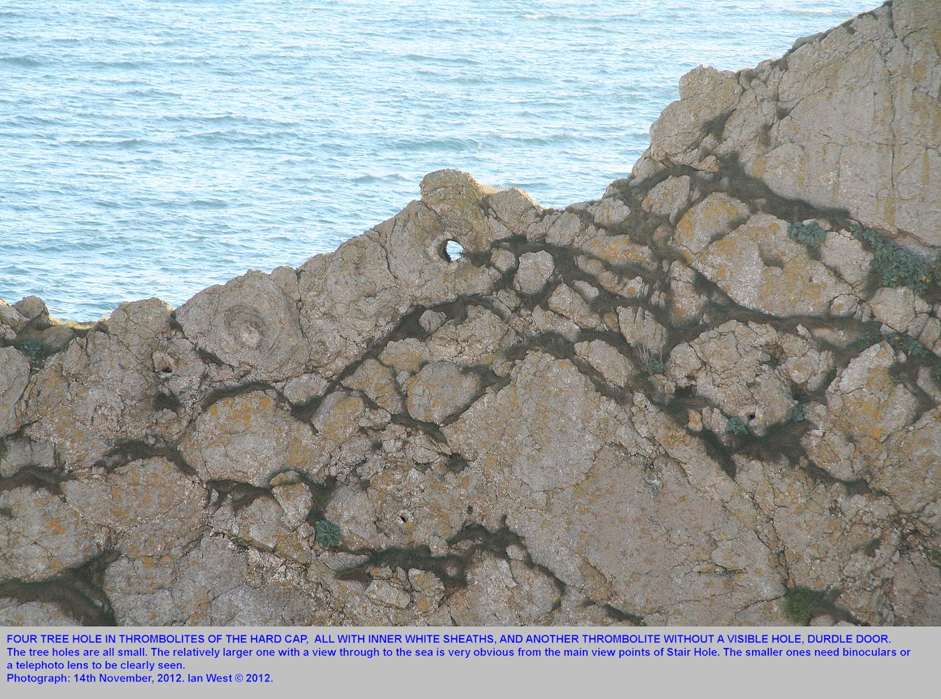 Several tree holes and surrounding thrombolites in the north face of Durdle Door, near Lulworth Cove, Dorset, 14th November 2012