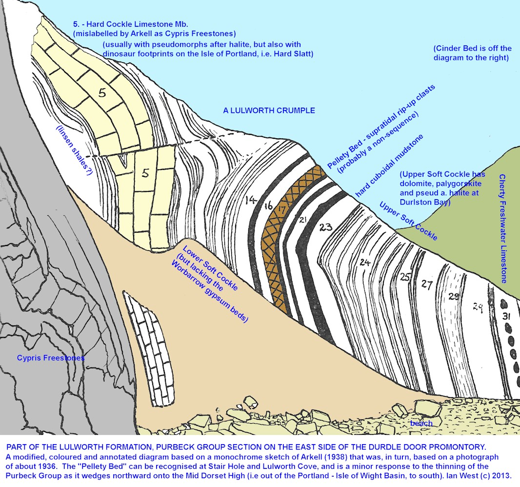 Cliff section of Purbeck Group strata on the east side of Durdle Door, near Lulworth Cove, Dorset, annotated diagram, modified after Arkell (1938)