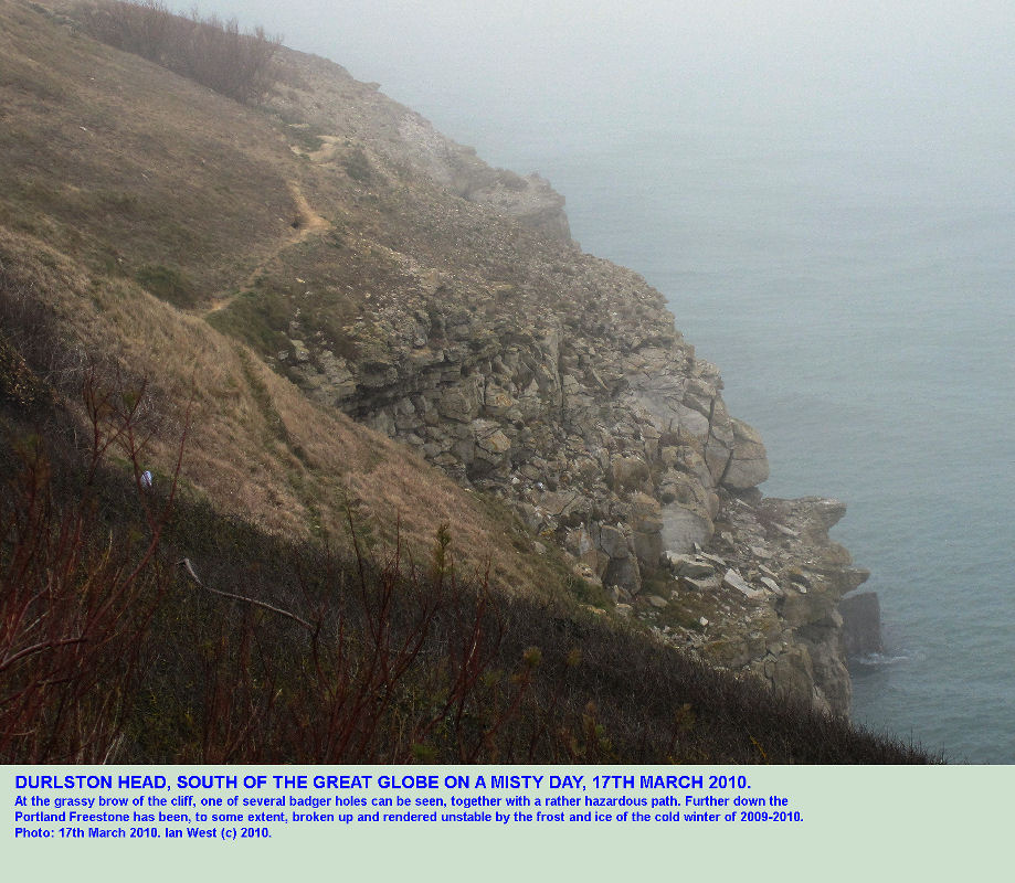 The cliff top south of the Great Globe, Durlston Head, Dorset, in misty weather, 17th March 2010, with a badger set, and with some collapse of Portland Stone