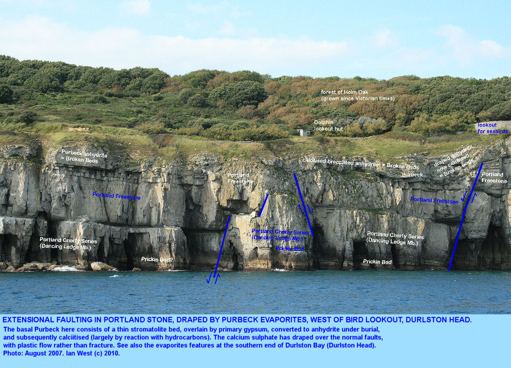 Purbeck evaporitic strata draped over extensional faults in the Portland Stone, between Durlston Head and Tilly Whim Caves, Swanage, Dorset, 2007 - labelled version