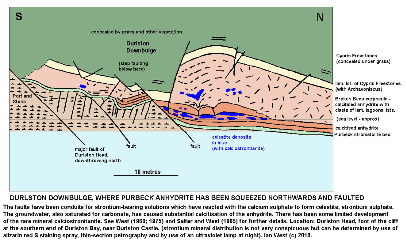 A diagram of the Durlston Downbulge at Durlston Head, Swanage, Dorset, where celestite and calciostrontianite is present in Purbeck calcitised anhydrite