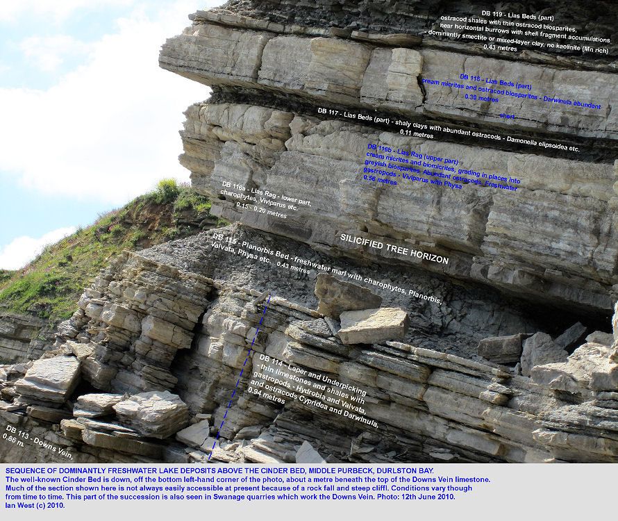 The Lias Rag, the Planorbis Bed, silicified tree horizon etc in the Intermarine Member, Middle Purbeck Group, Durlston Bay, Dorset, 2010