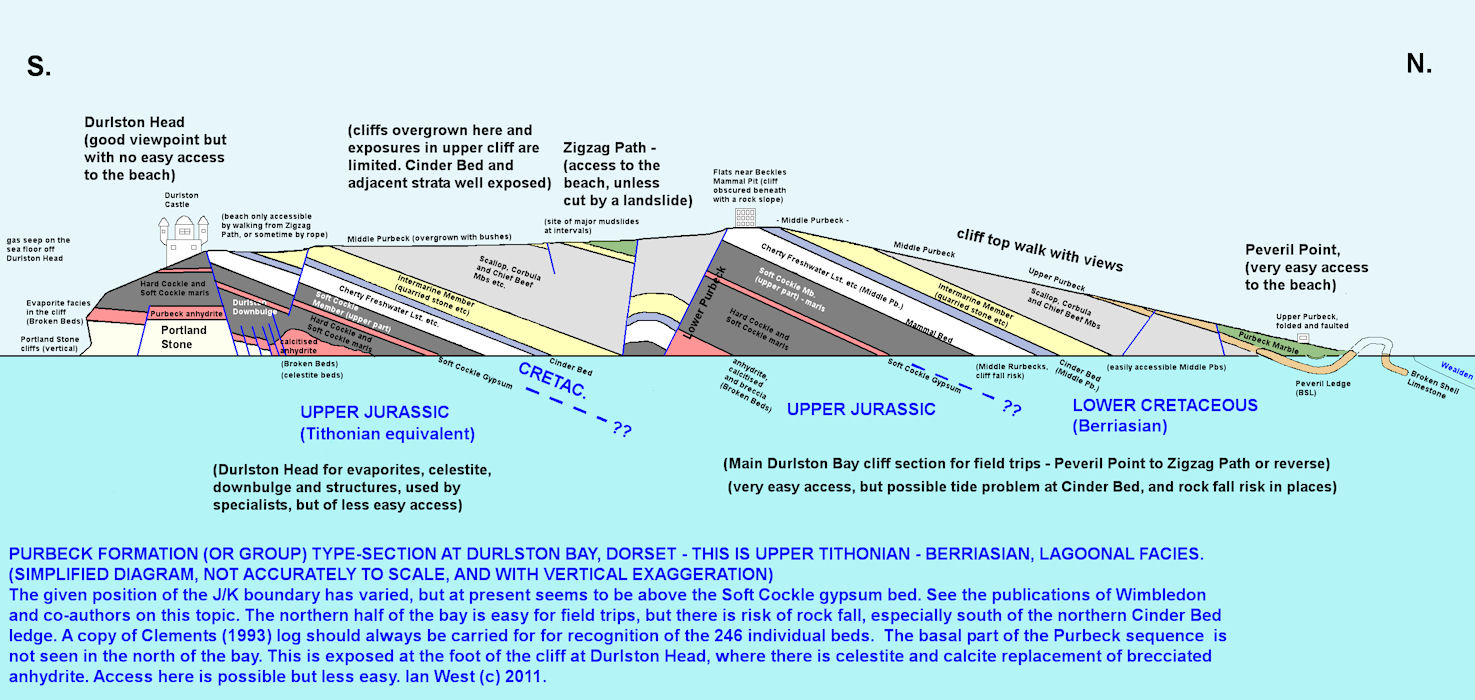 A simplified cliff section of Durlston Bay, Dorsetj, showing the Purbeck type-section, Upper Tithonian to Berriasian, with double vertical exaggeration