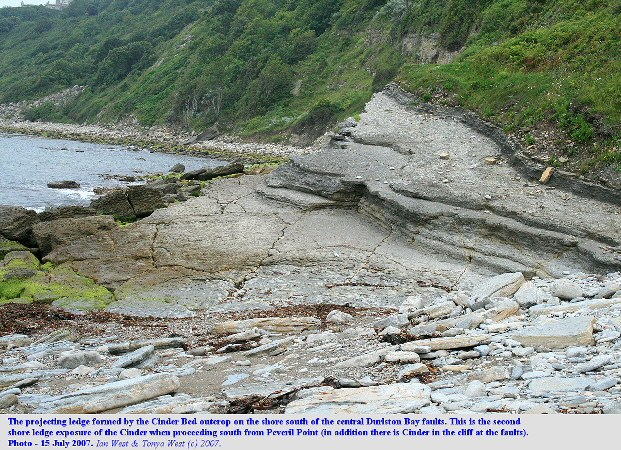 The southern shore ledge exposure of the Cinder Bed of the Purbeck Group in Durlston Bay, Dorset