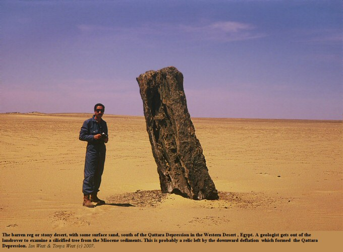 A silicified Miocene tree in the Western Desert, Egypt, south of the Qattara Depression, and probably exposed by deflation