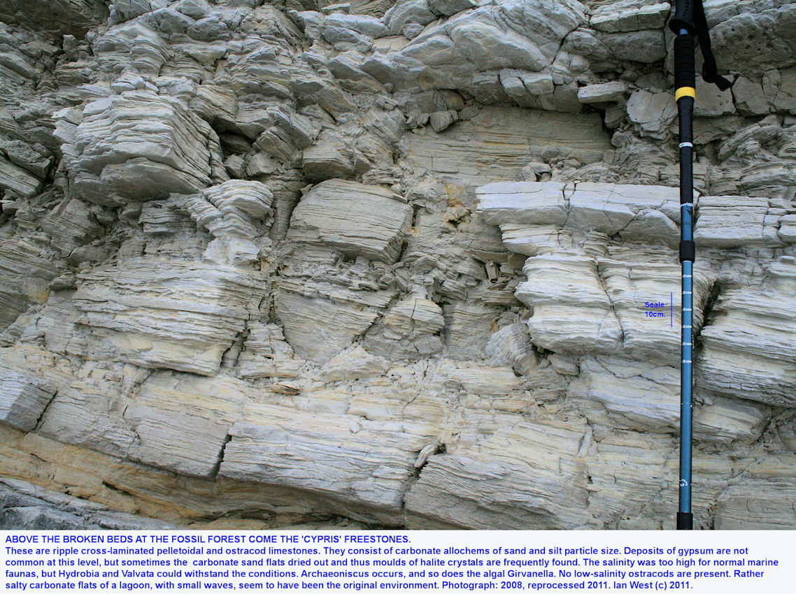 Fossil Forest ledge, east of Lulworth Cove, Dorset