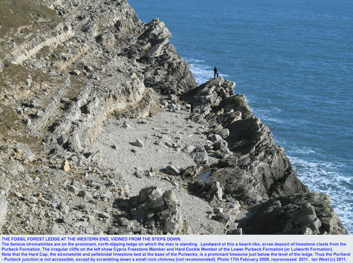A general view of the Fossil Forest ledge, east of Lulworth Cove, Dorset, from the steps down